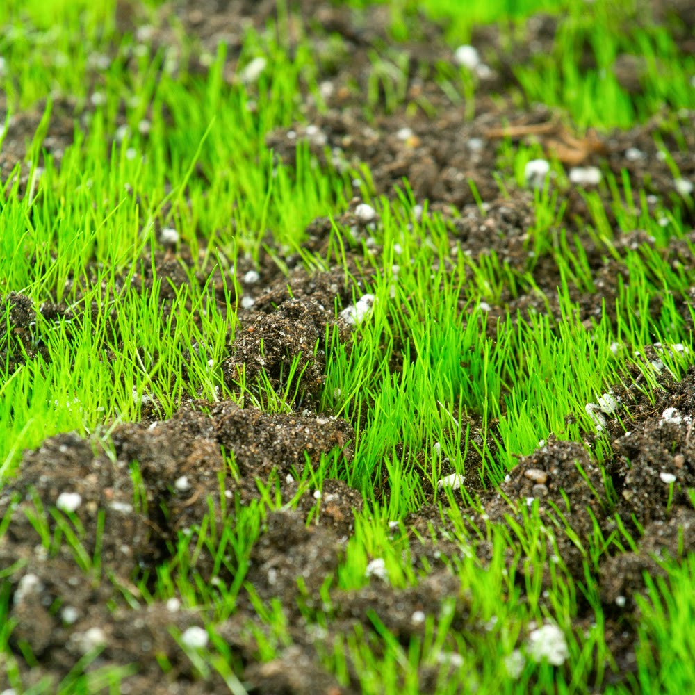 Steeplechase turf blog grass planting and care tips for for Care for new sod