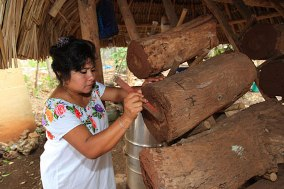 Mayan Stingless Bee Recuperation
