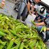 Feira de milho verde da Empasa terá forró-pé-de-serra neste sábado