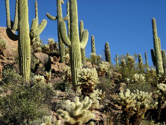 Inilah Manfaat Kaktus Bagi Manusia