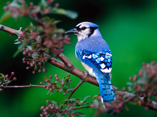Beautiful Bird in the Nature