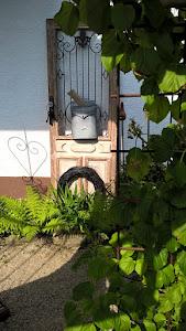 Offene Gartenpforte am 22.07.