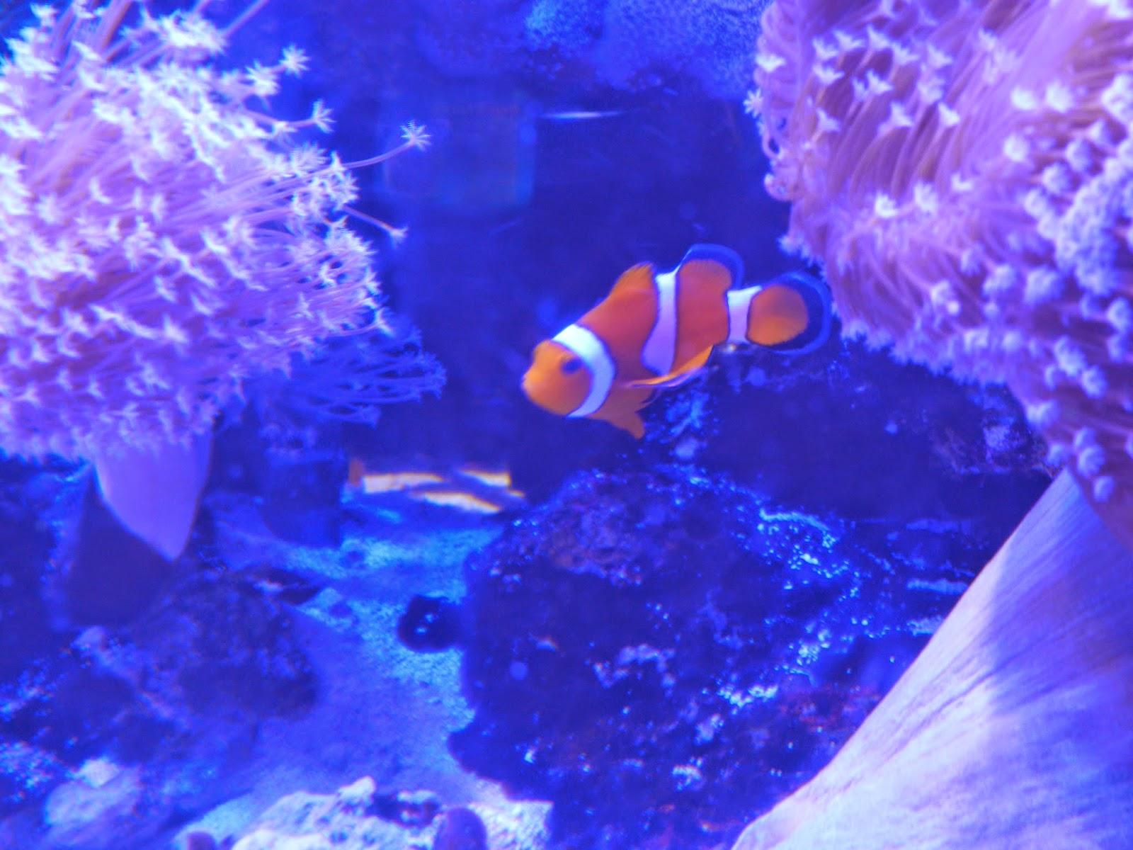 nemo aquarium disney world