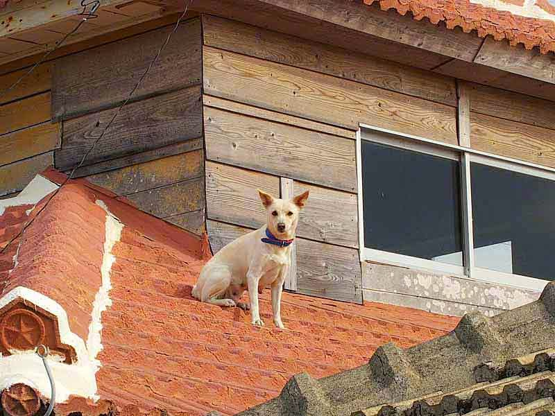 live dog on roof of home