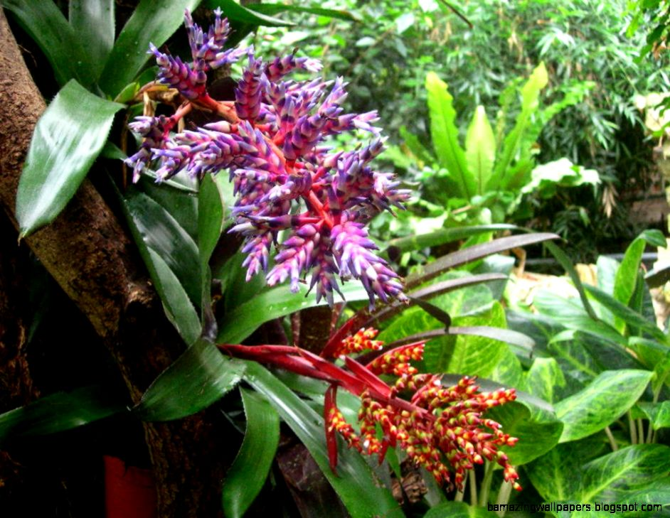 Plants In A Tropical Rainforest Biome  Home Interior Design
