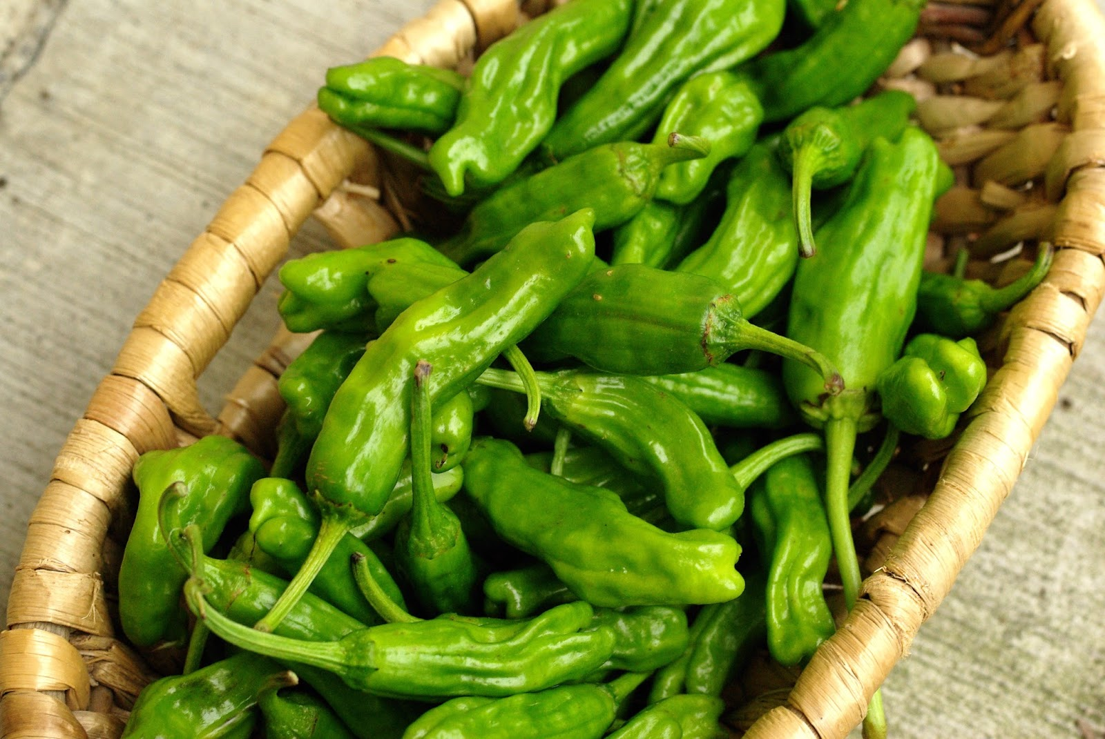 How to grow peppers in the open ground successfully