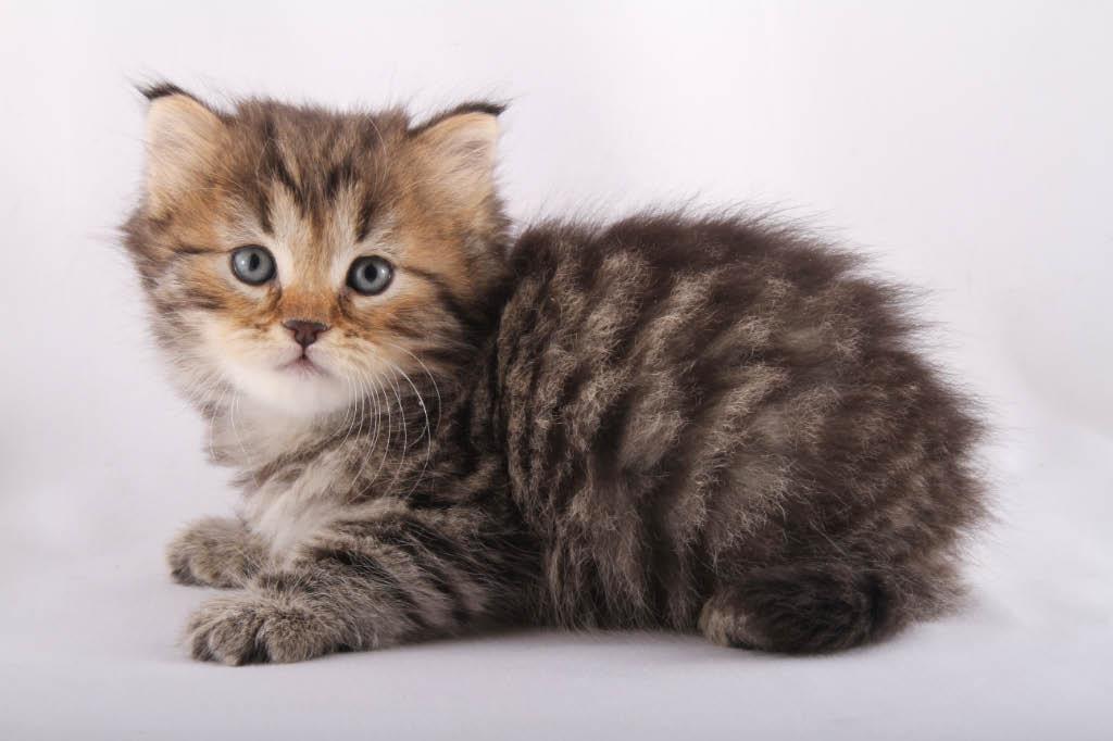 nasdaq:cats