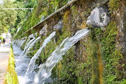 Clicca l'immagine per Visitare giardini - Villa d'Este