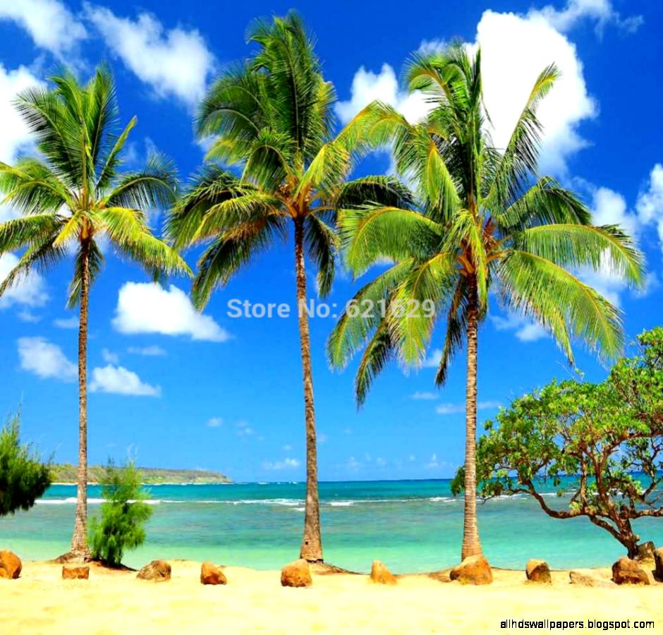 Popular Tropical Beach Backdrop Buy Cheap Tropical Beach Backdrop