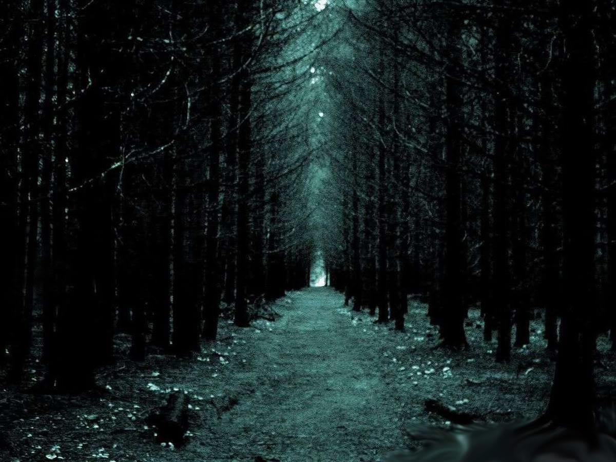 Imagenes De Bosques Oscuros
