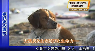 Helping Animal Survivors in Japan