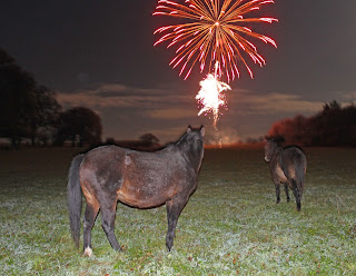 New Forest ponies and a fireworks display.
