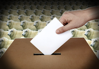 Bizarre Elections