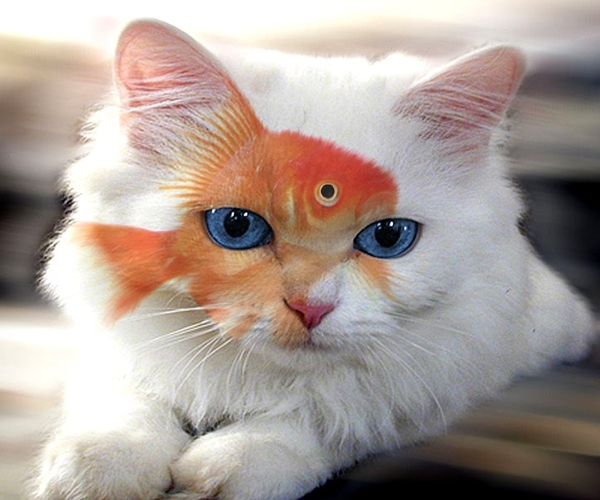 Weird Colored Animals  Funnilogy