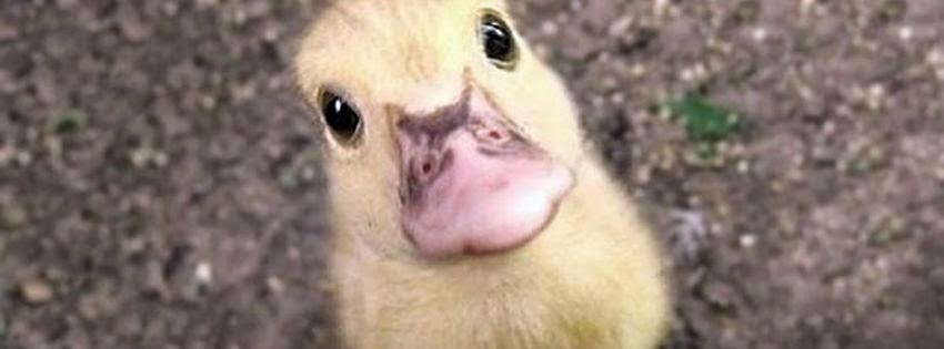 Adorable couverture facebook bébés des animaux