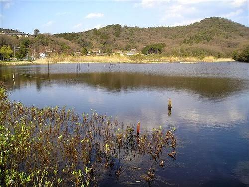 深泥池(みどろがいけ)