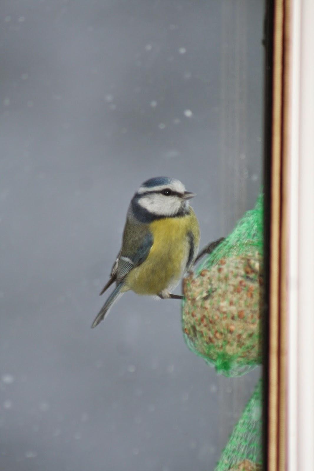 Le jardin d 39 h l ne les oiseaux du ciel for Oiseaux du ciel