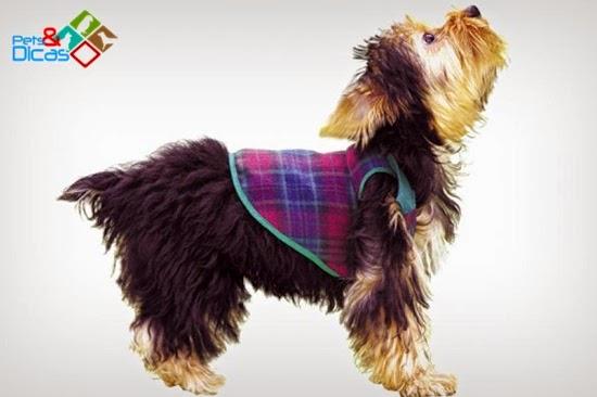 Molde roupa cão passo a passo