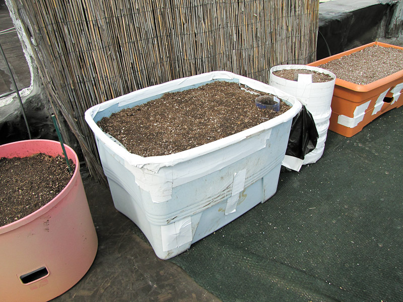 Bucolic bushwick the last summer vegetable - Diy self watering container garden ...