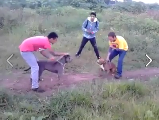 viral video Brutal Dog Fight