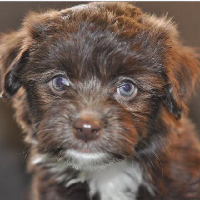 Các em cún đáng yêu chào đón thế giới mới ảnh 10