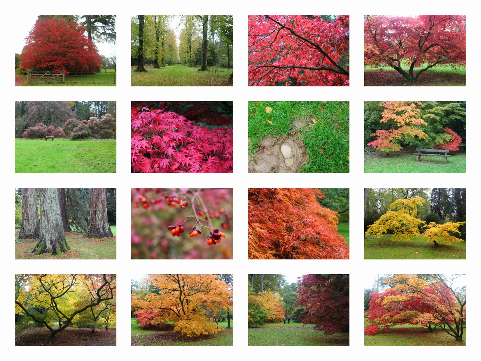 Photo collage of the trees at Westonbirt Arboretum showing off their autumn colours