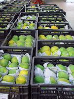 Receita da produção em perímetros irrigados no Ceará registrou crescimento de mais de 20%