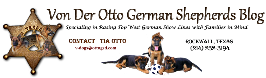 Von der Otto German Shepherds Blog