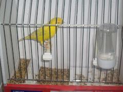 Mis pájaros en Mallorca 2010
