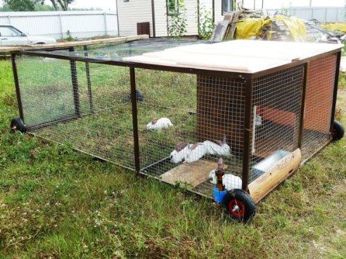 Это — экологически чистая газонокосилка. 6 месячных крольчат «скашивают» 6 квадратных метров газона за два дня. После этого газонокосилка передвигается на новое место.