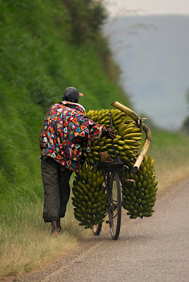 Persona llevando bananas en bicicleta
