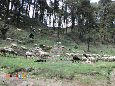 Villagers with herd of sheep