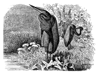 digital heron bird image