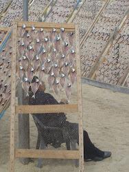 visita a praia de Nazare