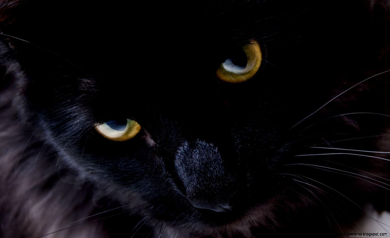 Black Cat Hd Wallpaper Widescreen | High Definitions ...