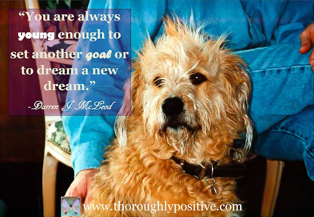 You are always young enough to set another goal or to dream a new dream. Picture of an old dog.