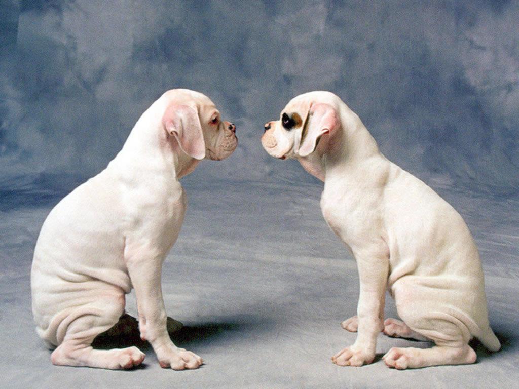 Fondos de pantalla para perros foto fondos de pantalla for Fondos de pantalla de perritos