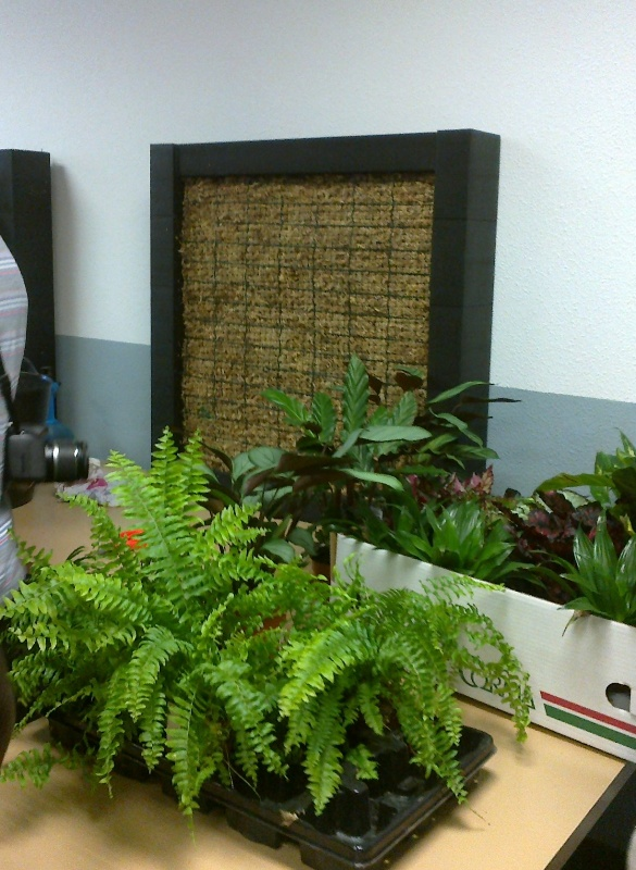 Curso jardines verticales madrid jardines verticales y for Plantas verticales de interior