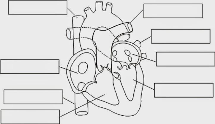 BIOANATOMÍA : Balotario de Biología y Anatomía 5to de Secundaria