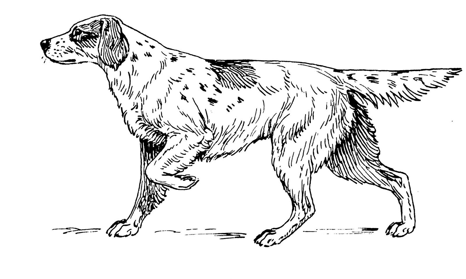 desenhos para colorir cachorros cachorrinhos e cachorrões