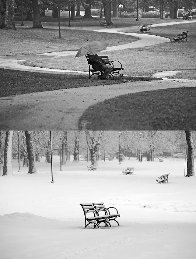 Portland, Maine Deering Oaks Winter and Summer Bench photo by Corey Templeton