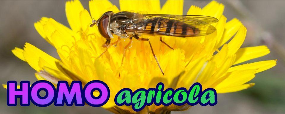 Homo Agricola 2