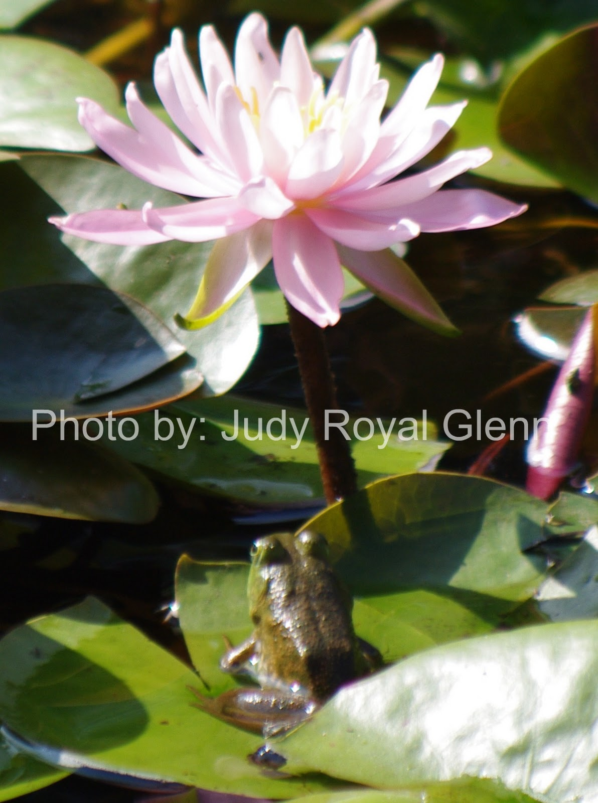 Under the lily pad flower seeing through gods eyes under the lily pad flower izmirmasajfo Images