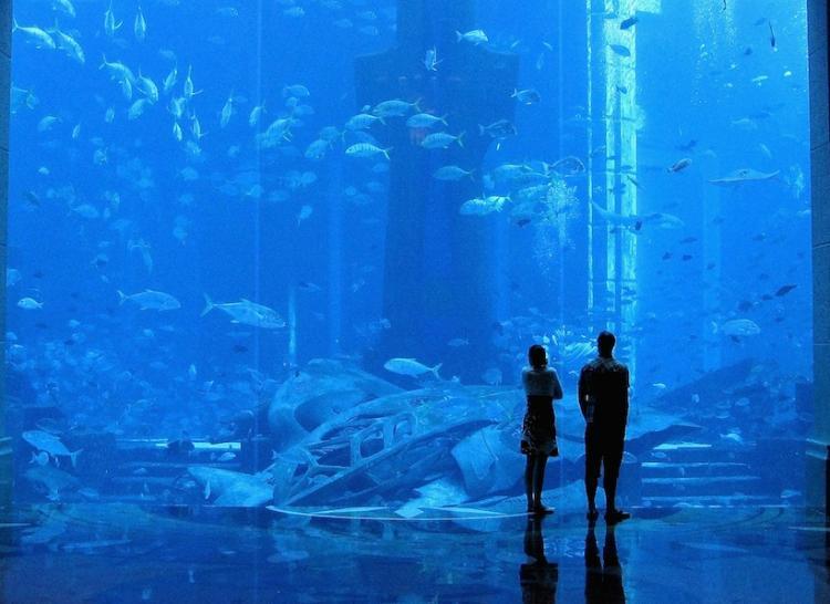 restorant dubai hotels aquarium
