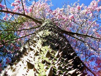 Pohon-pohon Langka nan Unik Dunia