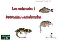 Más sobre animales vertebrados