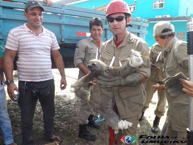 Bombeiros da corporação de Vitória de Santo Antão resgatam bicho preguiça no Horto Florestal de Limoeiro