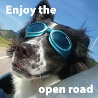 Gafas para perros, una idea original para emprender por internet