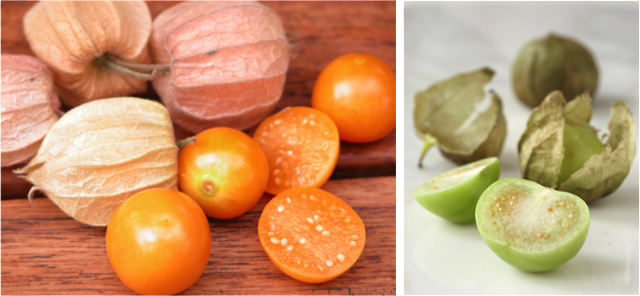 Cross sections of groundcherries and tomatillos