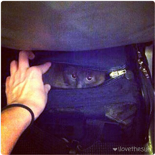 Traveling with a Cat as Carry-On Luggage